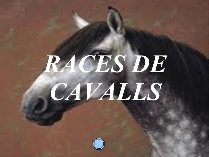 RACES DE CAVALLS