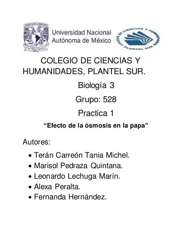 """COLEGIO DE CIENCIAS Y  HUMANIDADES, PLANTEL SUR.  Biología 3  Grupo: 528  Practica 1  """"Efecto de la ósmosis en la papa""""  A..."""