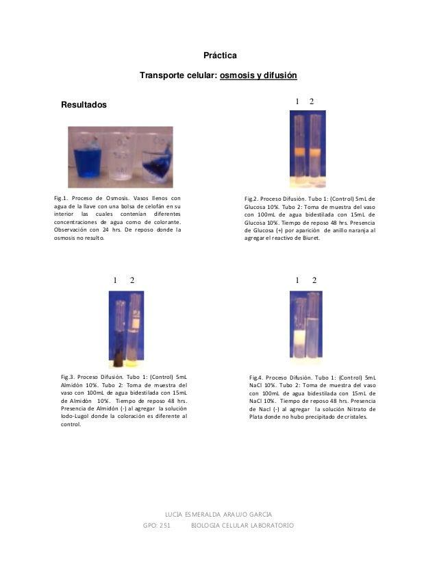 LUCIA ESMERALDA ARAUJO GARCIA GPO: 251 BIOLOGIA CELULAR LABORATORIO Práctica Transporte celular: osmosis y difusión Result...