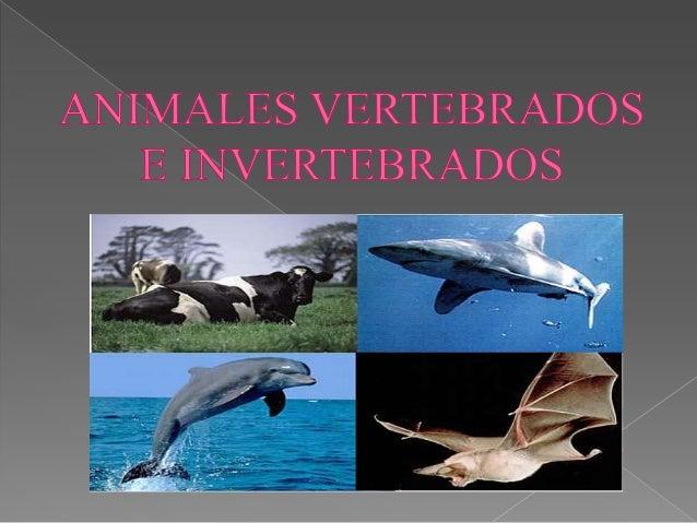    Animales vertebrados.   Animales invertebrados.   Vídeo explicativo   Clasificación de animales vertebrados e    in...