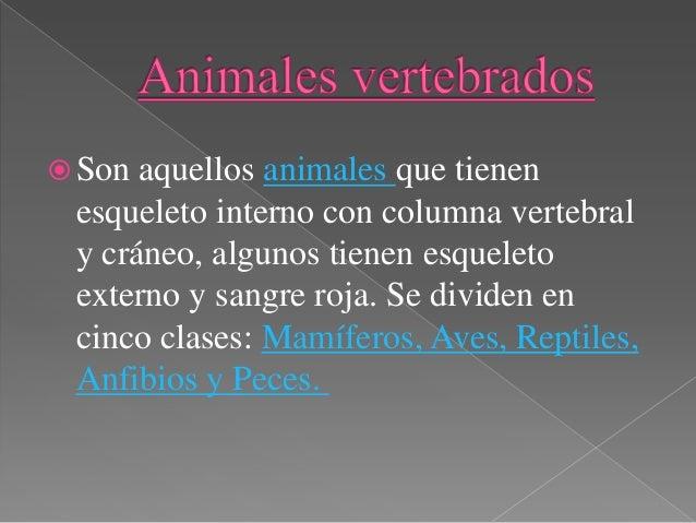  Los animales invertebrados son aquellas especies del reino animal que no disponen de los huesos conocidos como vértebras...
