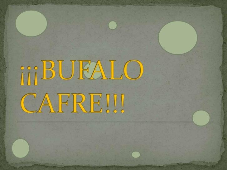 ¡¡¡BUFALO                  CAFRE!!!<br />