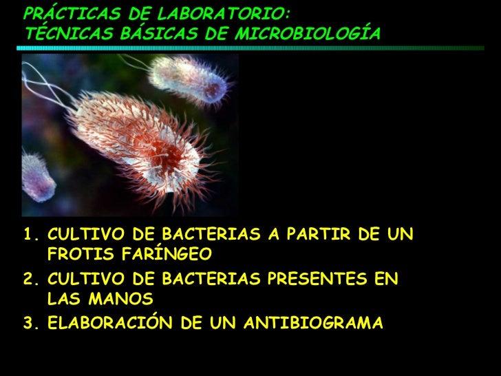 Practica antibiograma