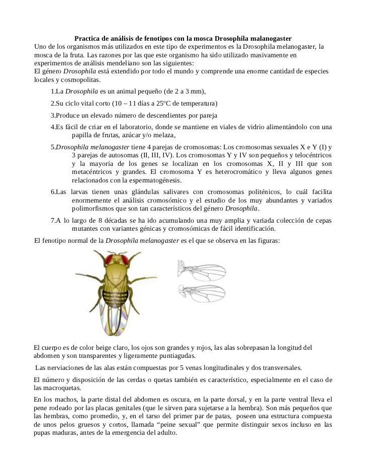 Practica de la mosca de la fruta