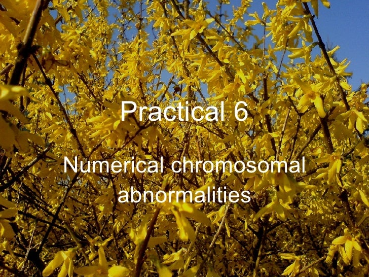 Practical 6 Numerical chromosomal abnormalities