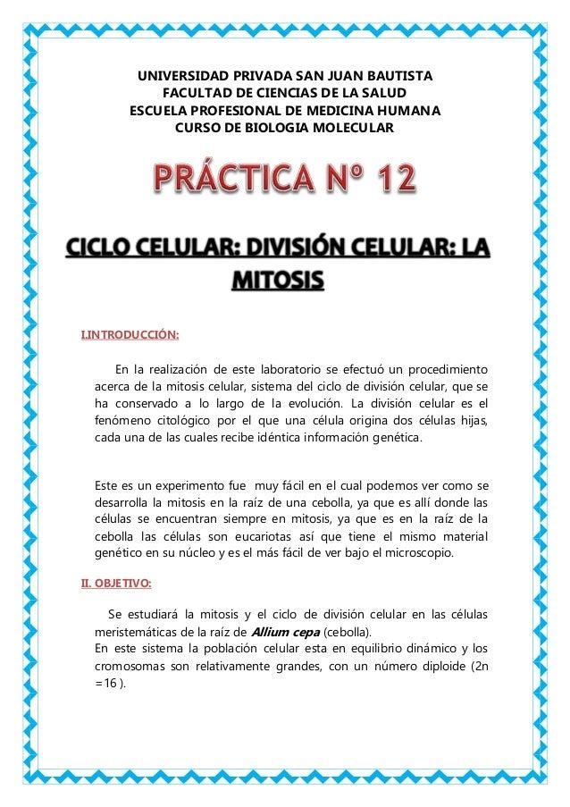 PRACTICA N°12:CICLO CELULAR: DIVISIÓN CELULAR: LA MITOSIS