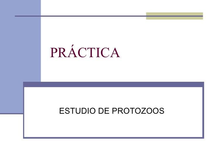 PRÁCTICA  ESTUDIO DE PROTOZOOS