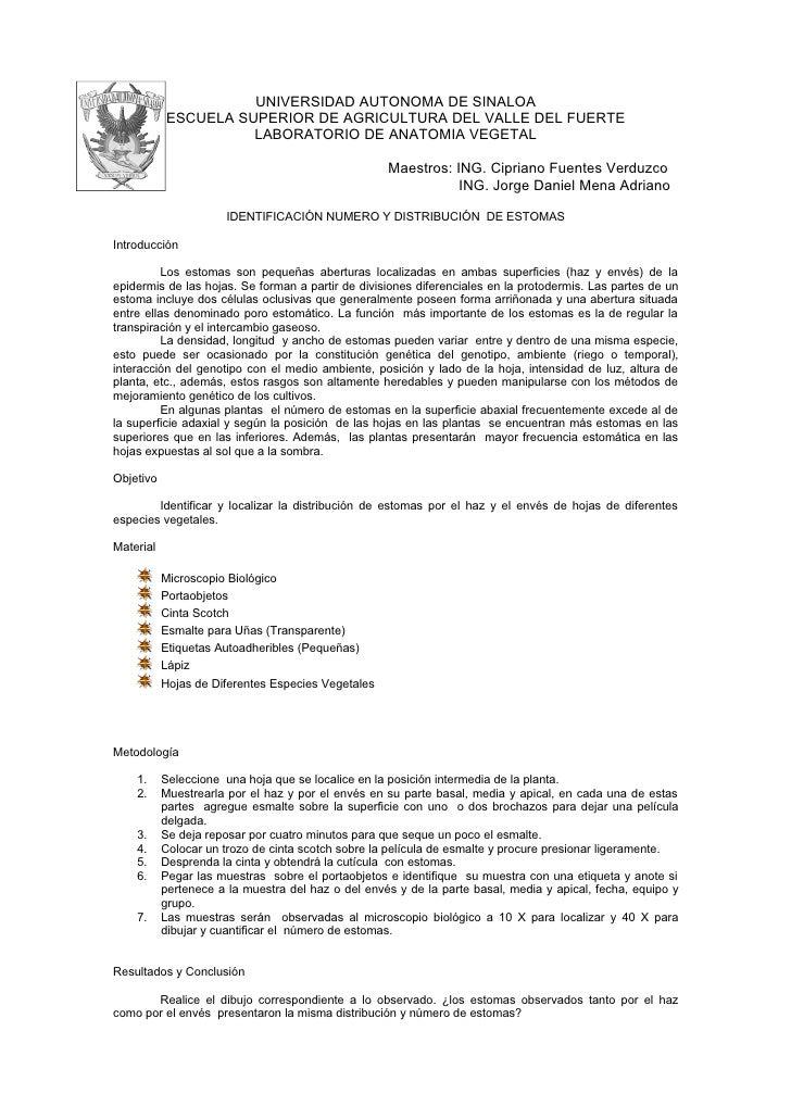 UNIVERSIDAD AUTONOMA DE SINALOA            ESCUELA SUPERIOR DE AGRICULTURA DEL VALLE DEL FUERTE                      LABOR...