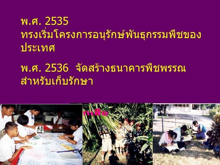 พ . ศ . 2535  ทรงเริ่มโครงการอนุรักษ์พันธุกรรมพืชของประเทศ พ . ศ . 2536  จัดสร้างธนาคารพืชพรรณ สำหรับเก็บรักษา  พันธุกรรมพ...