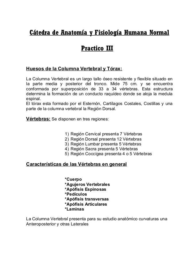 Practico iii huesos de la columna vertebral y tórax
