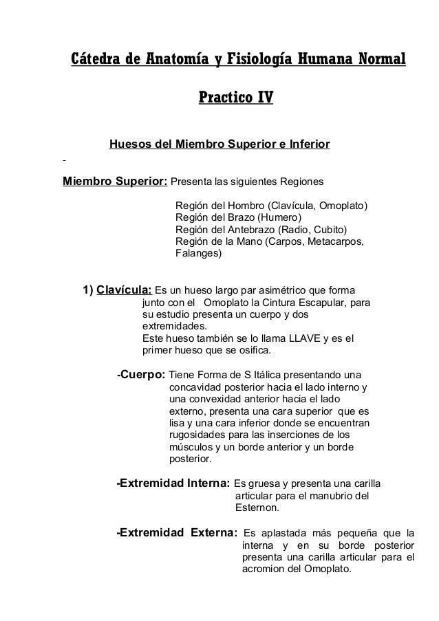 Practico iv huesos del miembro superior e inferior