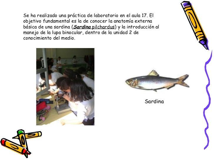 Anatomia externa de un pez