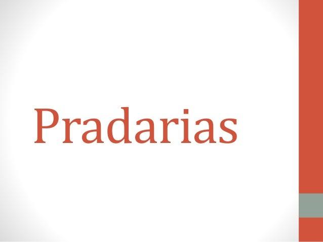 Pradarias
