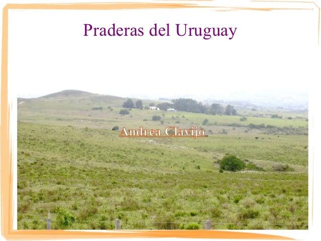 Praderas del Uruguay    Andrea Clavijo