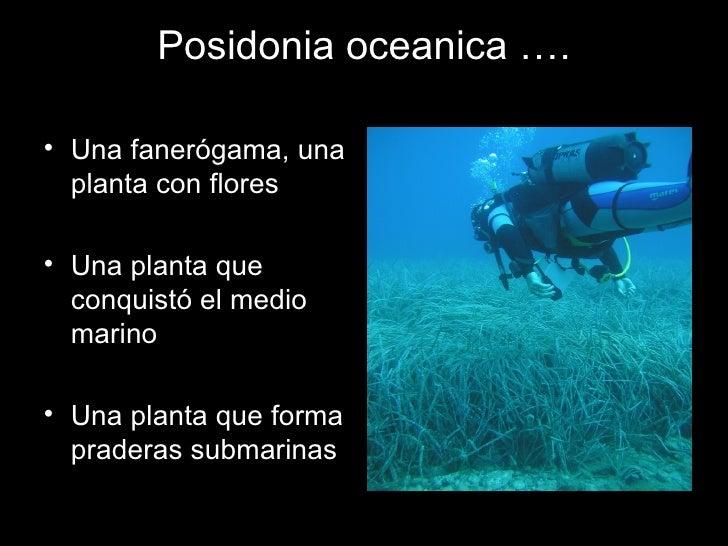 Praderas de Posidonia Slide 3