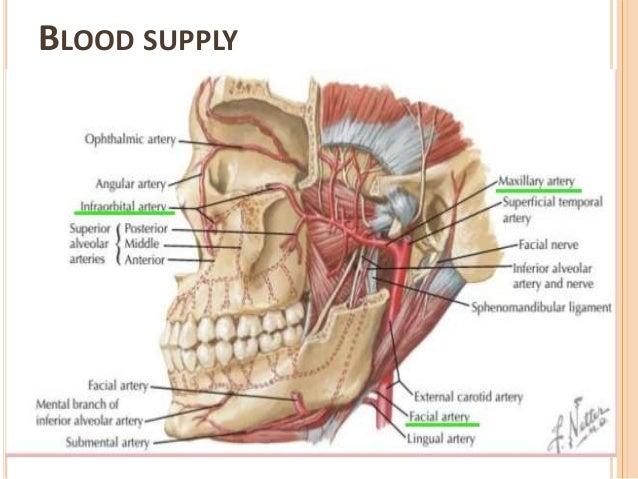 Facial Sinus Diagram Enthusiast Wiring Diagrams