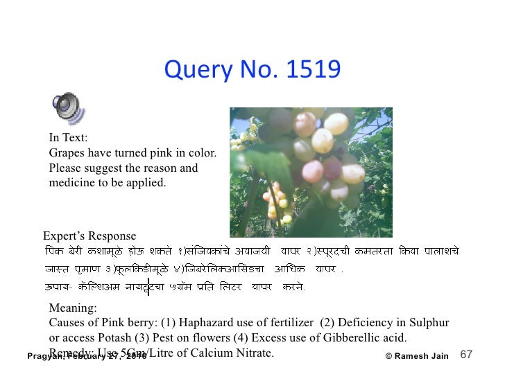 QueryNo.1519      In Text:     Grapes have turned pink in color.     Please suggest the reason and     medicine to be a...