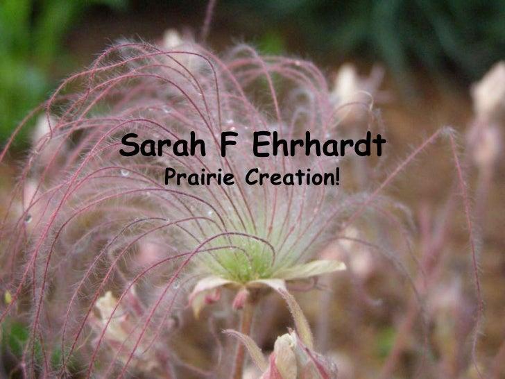Sarah F Ehrhardt  Prairie Creation!