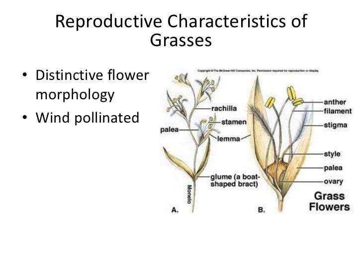 Prairies of the great plains