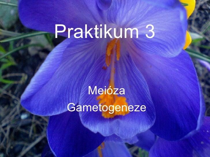 Praktikum 3 Meióza Gametogeneze