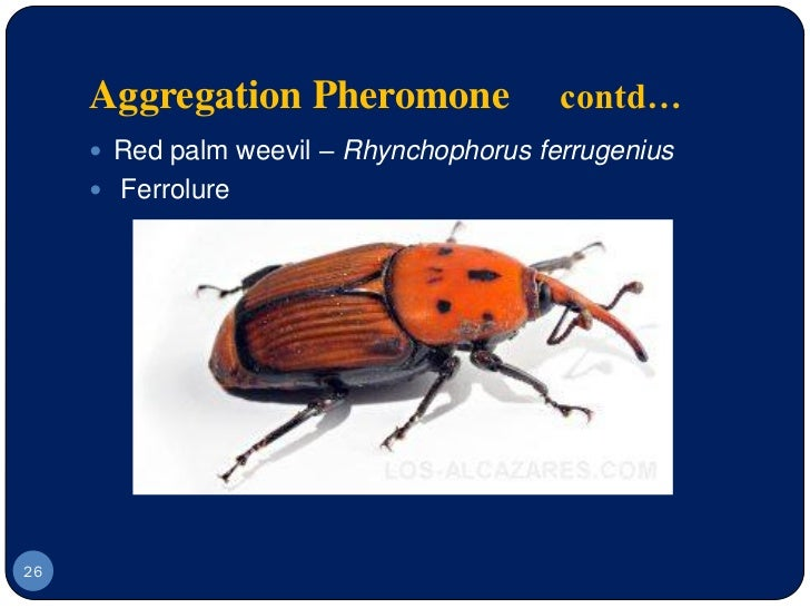 sex pheromones in insects Interference techniques insect pheromones affect intraspecific interactions sex pheromones that in most cases attract males to virgin females have been the most.