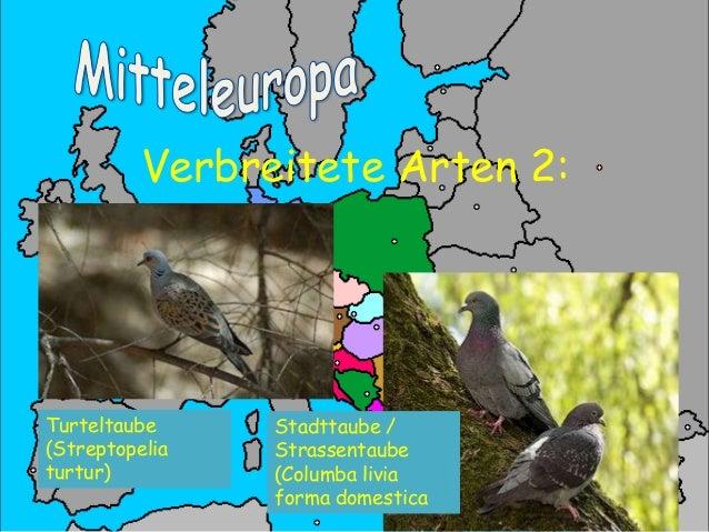 Ernährung - Die meisten Arten ernähren sich fast ausschliesslich pflanzlich  Tauben sind anders als viele andere samenfres...