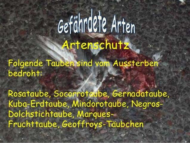 """""""Tauben vergiften im Park"""" Ein Hasslied von Georg Kreisler (18. Juli 1922 – 22. November 2011)  (Österreichischer Komponis..."""