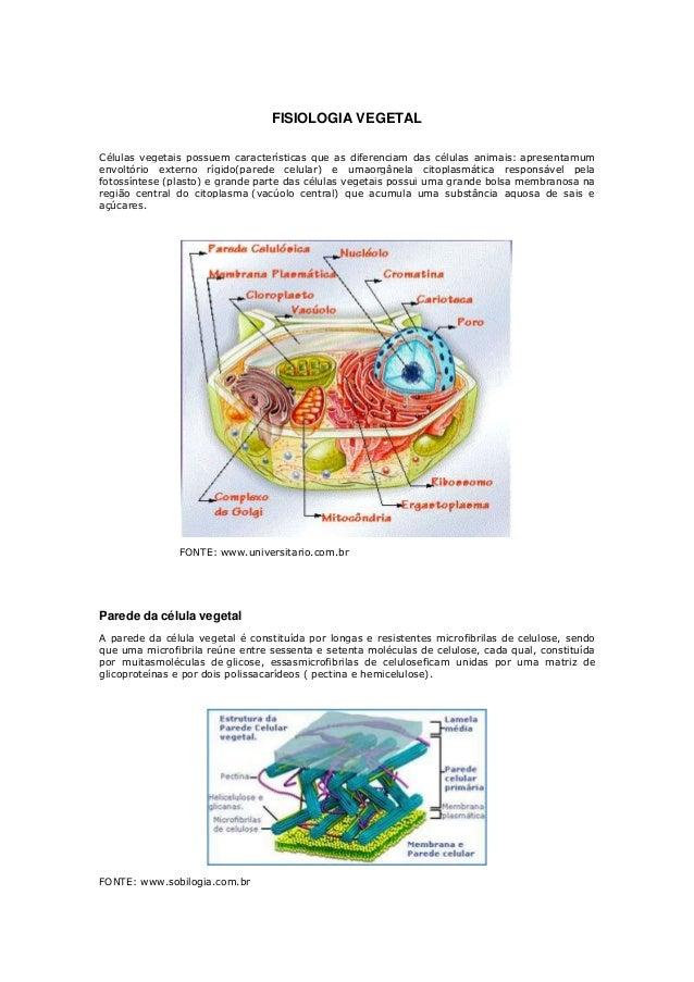 FISIOLOGIA VEGETALCélulas vegetais possuem características que as diferenciam das células animais: apresentamumenvoltório ...