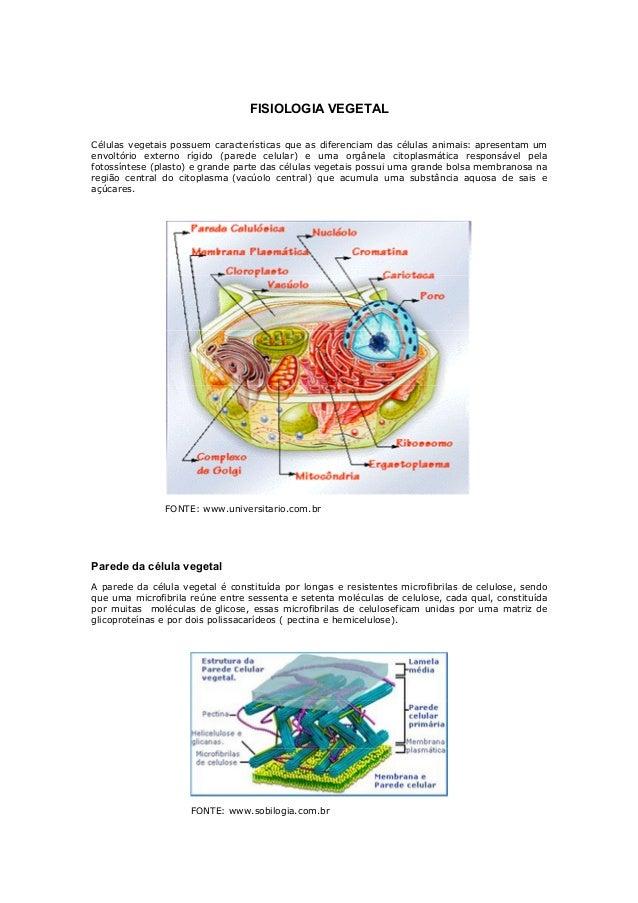 FISIOLOGIA VEGETALCélulas vegetais possuem características que as diferenciam das células animais: apresentam umenvoltório...