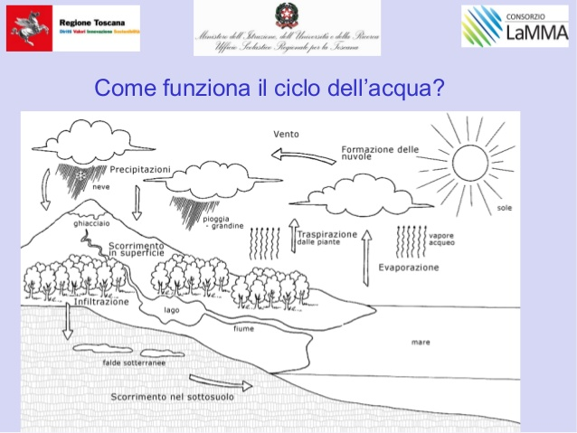 Top Prato primaria puddu ZR67