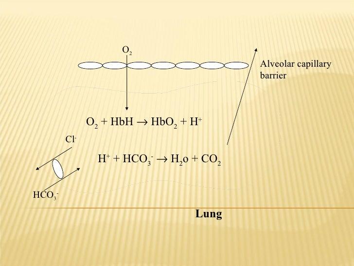 HCO 3 - O 2 Alveolar capillary barrier Cl - O 2  + HbH    HbO 2  + H +   H +  + HCO 3 -     H 2 o + CO 2 Lung
