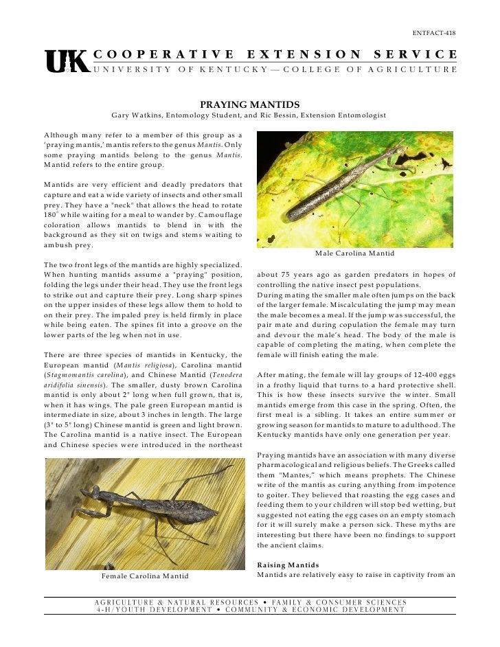 ENTFACT-418                                              PRAYING MANTIDS                    Gary W atkins, Entomology Stud...