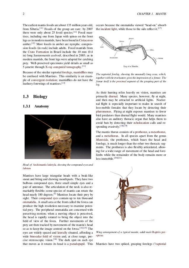 Pray Mantis Symbology of Gods Prophets A Creation Symbol of Gods Prop…