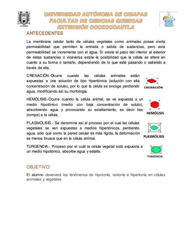 Práctica 6 Crenación, Hemólisis, Plasmólisis y Turgencia