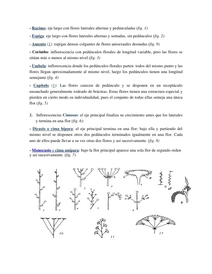 Excelente La Anatomía De Una Flor Colección - Imágenes de Anatomía ...
