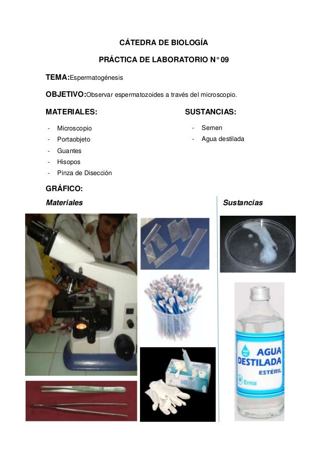 CÁTEDRA DE BIOLOGÍA PRÁCTICA DE LABORATORIO N° 09 TEMA:Espermatogénesis OBJETIVO:Observar espermatozoides a través del mic...