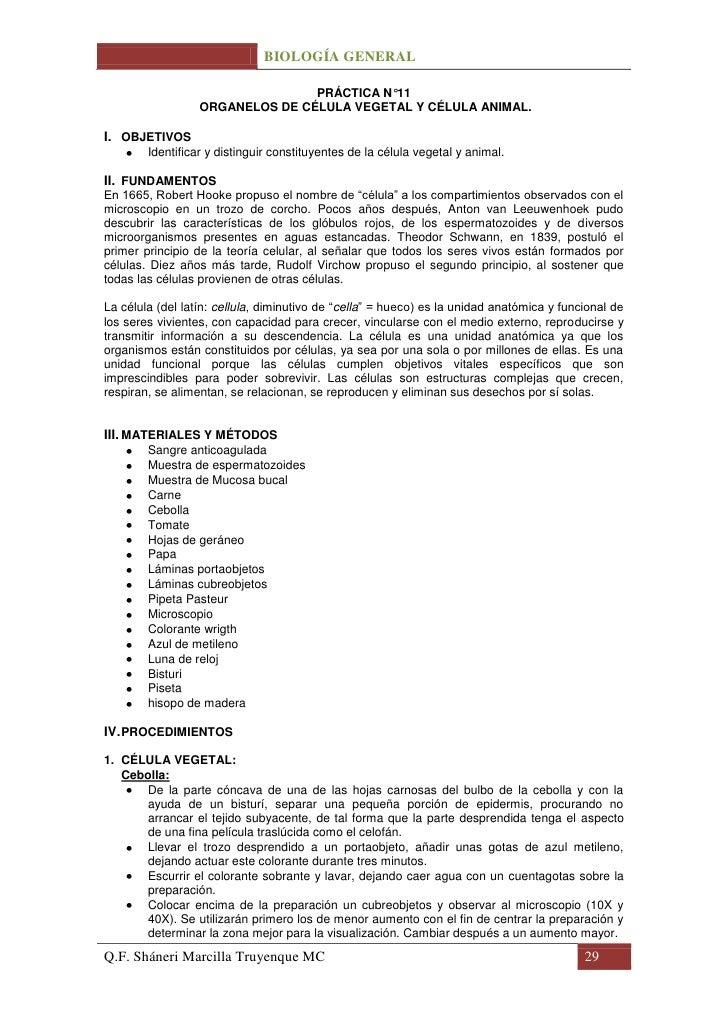 BIOLOGÍA GENERAL                                 PRÁCTICA N°11                  ORGANELOS DE CÉLULA VEGETAL Y CÉLULA ANIMA...