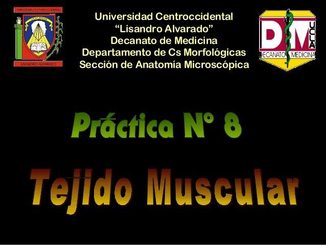 """Universidad Centroccidental       """"Lisandro Alvarado""""      Decanato de MedicinaDepartamento de Cs MorfológicasSección de A..."""