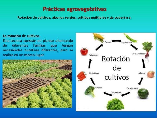 Pr cticas agron micas de conservaci n de suelo y agua for Que son cultivos asociados