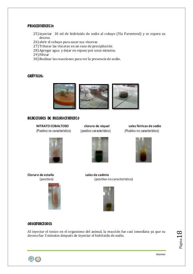 PROCEDIMIENTO: 25) inyectar 10 ml de hidróxido de sodio al cobayo (Vía Parenteral) y se espera su deceso. 26) abrir el cob...