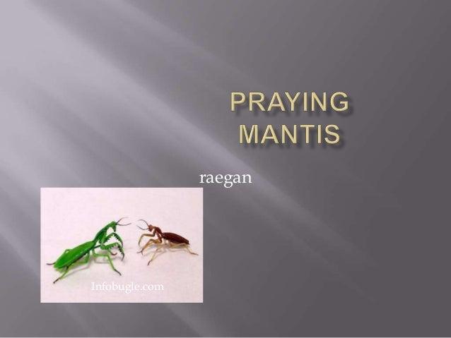 raeganInfobugle.com