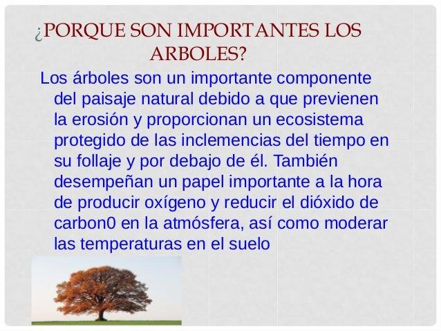 felipe gonzalez ForPorque Son Importantes Los Arboles Wikipedia