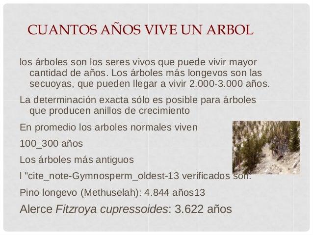 Felipe gonzalez for Cuanto mide un arbol