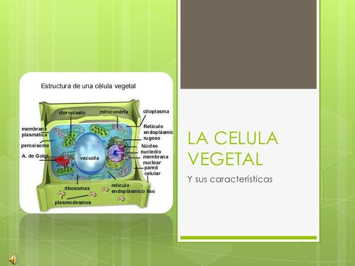LA CELULA VEGETAL<br />Y sus características<br />