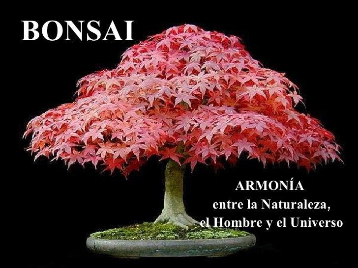 BONSAI ARMONÍA  entre la Naturaleza, el Hombre y el Universo