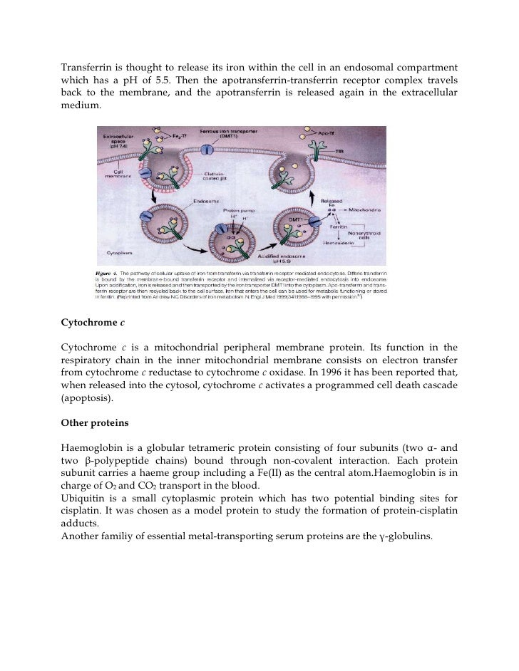investigation into transition metals as catalysts essay Alcohol oxidation ferrite magnetic nanoparticles transition metals magnetic   therefore, the investigation of the catalytic performance of.