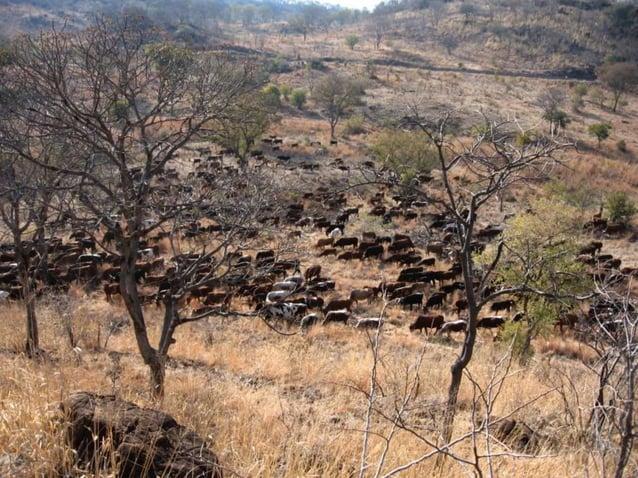 Malawi Dream