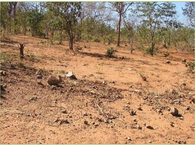 39 CELLUCT- Eastern Zimbabwe