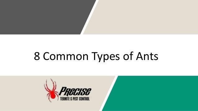8 Common Types of Ants