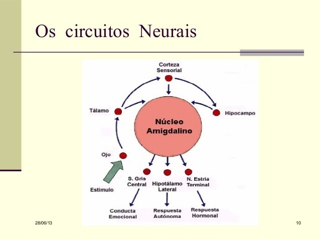 Circuito Neuronal : Preconceito implícito e explicito